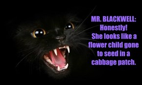 Catty Black Cat