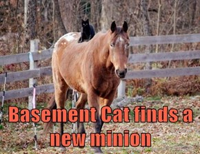 Basement Cat finds a new minion
