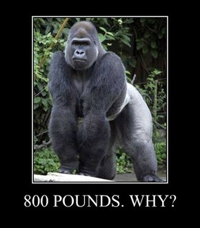 800 POUNDS. WHY?