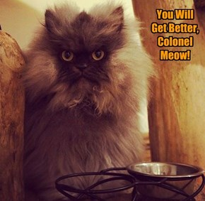 You Will Get Better, Colonel Meow!