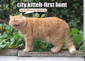 city kitteh-first hunt