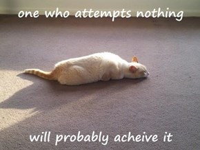 Unless You Want to Achieve the Purrfect Nap