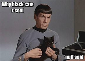 Why black cats r cool