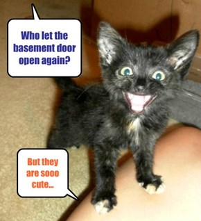Who let the basement door open again?
