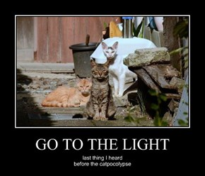 GO TO THE LIGHT