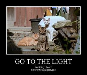 GO TO THE LIGHT