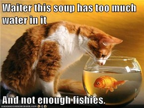 Waiter this soup has too much water in it  And not enough fishies.