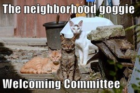 The neighborhood goggie  Welcoming Committee