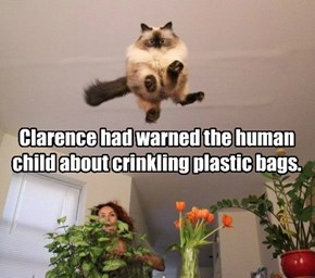 Clarence had warned the human child about crinkling plastic bags.