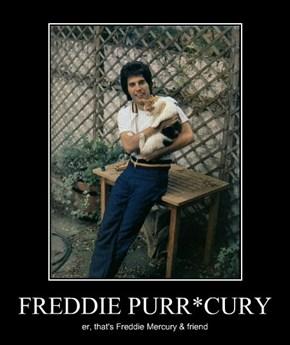 FREDDIE PURR*CURY
