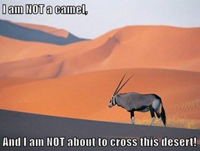 I am NOT a camel,  And I am NOT about to cross this desert!
