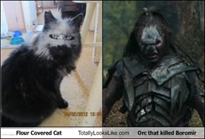 Flour Covered Cat Totally Looks Like Orc That Killed Boromir