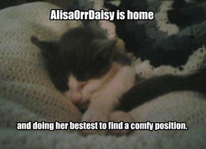 AlisaOrrDaisy is home