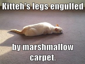 Kitteh's legs engulfed  by marshmallow carpet.