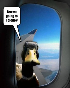 Are we going to Toledo?