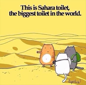 The Cats Were Thoroughly Enjoying Their World Toilet Tour