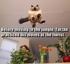 Before moving to the jungle, Tarzan practiced his moves at the florist.