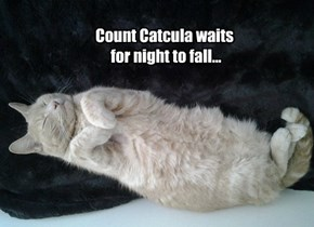 Count Catcula waits  for night to fall...