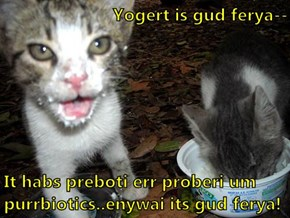 Yogert is gud ferya--  It habs preboti err proberi um purrbiotics..enywai its gud ferya!