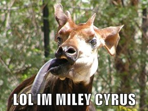 LOL IM MILEY CYRUS