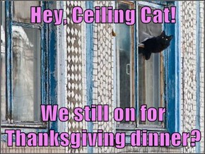 Hey, Ceiling Cat!  We still on for Thanksgiving dinner?