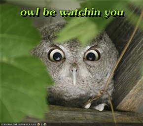 owl be watchin you