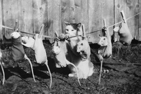 Historic LOLcat hangs a row of tame rats on the washing line to dry, 1933