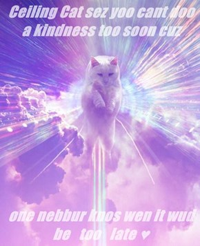 Ceiling Cat sez yoo cant doo a kindness too soon cuz  one nebbur knos wen it wud be   too   late ♥