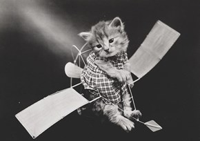 Historic LOLcat on an Aeroplane