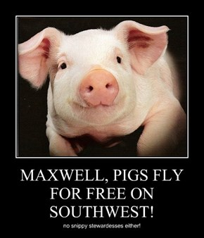 MAXWELL, PIGS FLY FOR FREE ON SOUTHWEST!