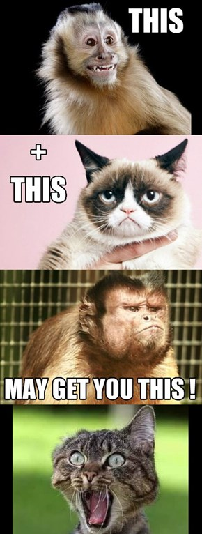 Don't monkey around with Cats!