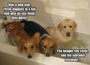Rub-a-dub-dub, Three doggies in a tub And who do you think they were?