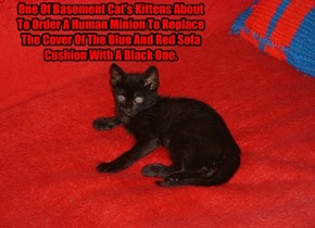 One Of Basement Cat's Kittens About To Order A Human Minion To Replace The Cover Of The Blue And Red Sofa Cushion With A Black One.