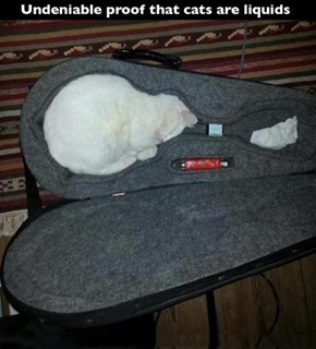 Cats Just Melt Whenever They Hear a Mandolin