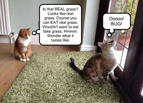 OCD Cat and Overthinker Cat