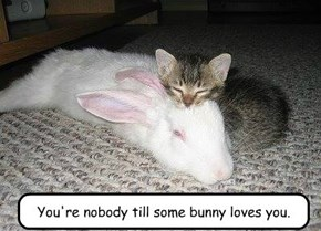 You're nobody till some bunny loves you.
