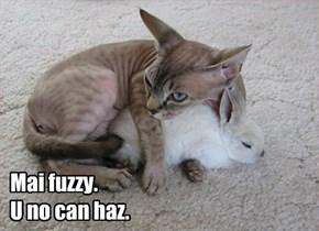 Mai fuzzy.   U no can haz.