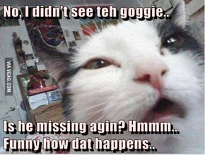 No, I didn't see teh goggie..  Is he missing agin? Hmmm.. Funny how dat happens..
