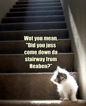 "Wot you mean, ""Did you juss come down da stairway from Heaben?"""