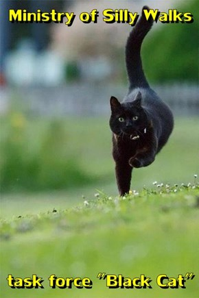 "Ministry of Silly Walks  task force ""Black Cat"""