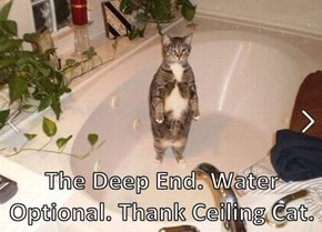 The Deep End. Water Optional. Thank Ceiling Cat.