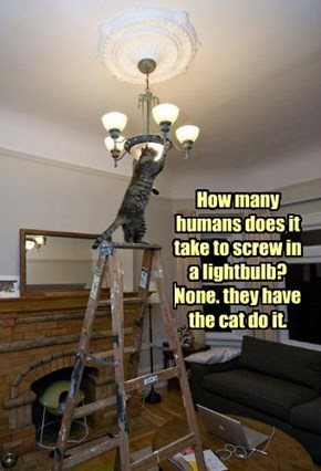 How many humans does it take to screw in a lightbulb? None. they have the cat do it.