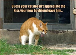 Guess your cat doesn't appreciate the kiss your new boyfriend gave him...