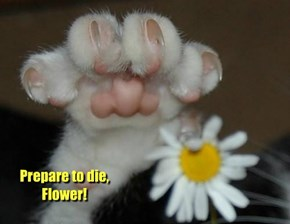 Prepare to die, Flower!