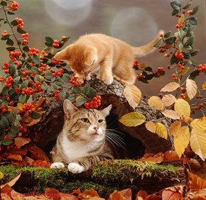 Squee Spree: Mother and Playful Kitten in the Leaves