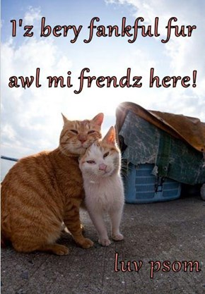 I'z bery fankful fur awl mi frendz here!  luv psom