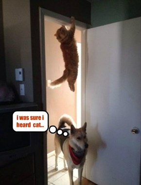 i was sure i heard  cat...
