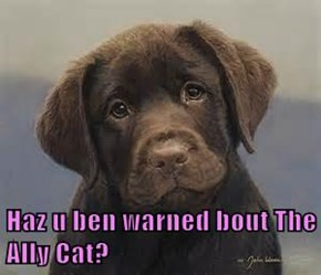 Haz u ben warned bout The Ally Cat?