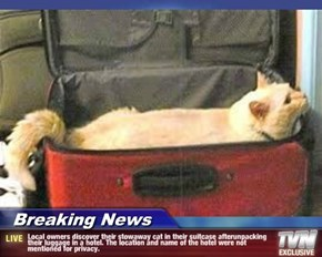 Breaking News - Local owners discover their stowaway cat in their suitcase afterunpacking their luggage in a hotel. The location and name of the hotel were not mentioned for privacy.