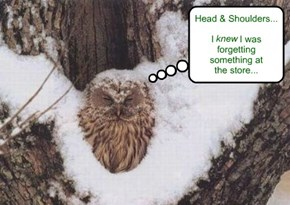 Now owl be the laughing stock of the forest!